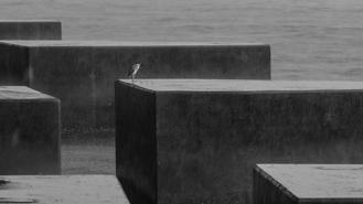 A lone bird is perched on a concrete block in the sea at North Point, seemingly oblivious to the harsh surroundings, as driving rain lashes the sea and shores under an amber rainstorm signal.