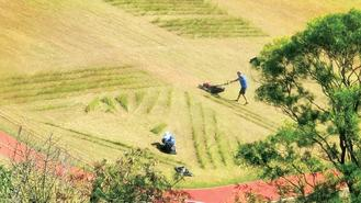 Workers mow the lawn in a park in Quarry Bay. It was a labor-intensive tall order to mow the whole stretch of lawn.