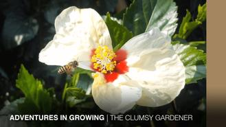 Join Josh on his adventures in home gardening. 