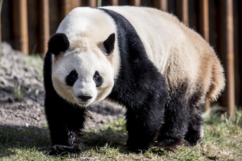 Danish Queen opens Copenhagen Panda House | Life & Art | China Daily