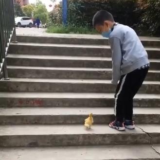 Watch how the little duckling rises to the challenge from the little boy.