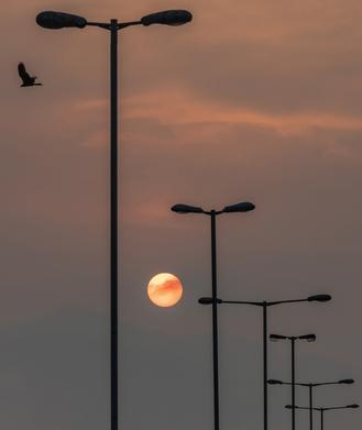A solitary eagle flies in the sky as the sun falls to the horizon at Western District Public Cargo Working Area which is also known as Hong Kong's