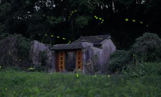 China Daily's photographer captured the beauty of fireflies at Sha Lo Tung, an 80-hectare valley sitting at an altitude of about 200 meters in Tai Po district, Hong Kong.