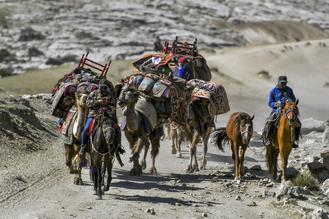 Kazak herders drive livestock along the bucolic Hongshanzui Trail as they head to summer homes.
