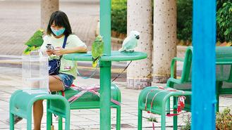 A girl who has her pet parrots out for a walk occupies a table for three at a park in Po Lam with her three cute companions, and enjoys a placid moment after the heavy rain.