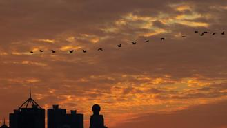 A line of birds flies in the brilliant fiery sunset below the clouds over Tsim Sha Tsui. This amazes people with scenes of nature's dramatic beauty.
