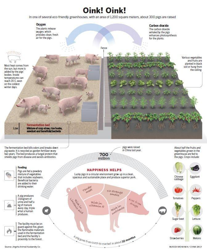 Pig Palace: Where little goes to waste | In-Depth China