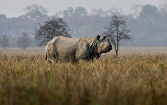 The rhino had been part of an ambitious effort to save the subspecies from extinction after decades of decimation by poachers.