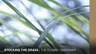 The Gardener talks grass today as he harvests copious amounts of lemongrass. There's chicken wings involved.