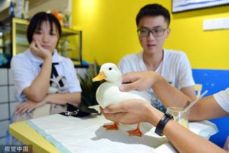 In Chengdu, Southwest China's Sichuan province, a cafe run by several college graduates uses call ducks to attract customers.