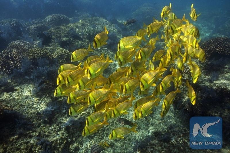 China outlines 4 principles for marine biodiversity treaty | Nation