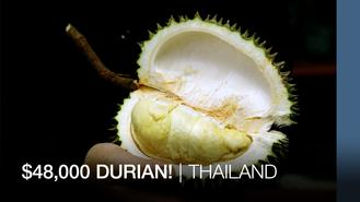 King of durians! At nearly $48,000 apiece, Thailand's Nonthaburi province near Bangkok produces the world's most-expensive durians. We find out what makes it so special.