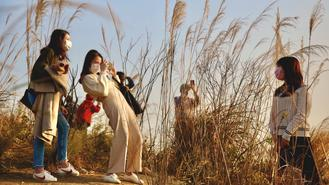 Hikers snapped photos in the splendid sea of silver grass on Sunset Peak, Hong Kong's third highest mountain.