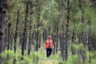 Caretakers who have been patrolling for 17 years want to stay in their forest home.