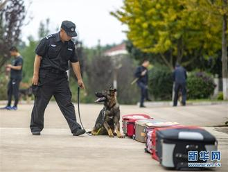 Born on Dec 19, 2018, Kunxun was cloned from Huahuangma, a female Kunming wolfdog on duty at the Pu'er police station in Yunnan province.