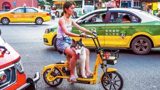 A woman and her dog navigate the traffic on an electric bike on Dongjie Street, Yibin, Sichuan province, on May 23.