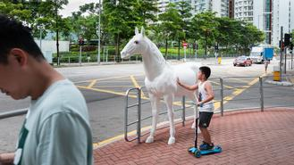 A boy checks out a life-size sculpture of a horse in Sai Wan Ho.