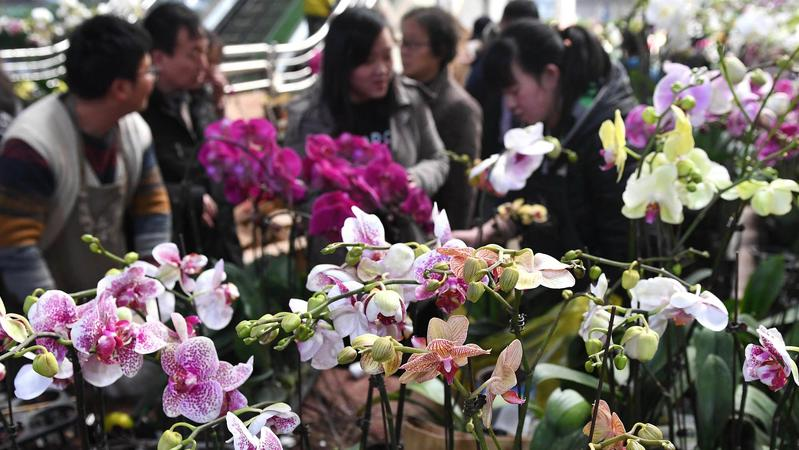 People select flowers at a flower market in Kunming, Yunnan province. This year witnessed a decline of fresh flowers trade volume but a higher price.