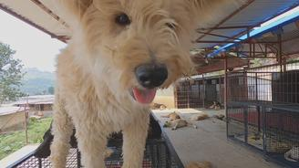 More than 10K street dogs have found love and care at this shelter in Kathmandu.